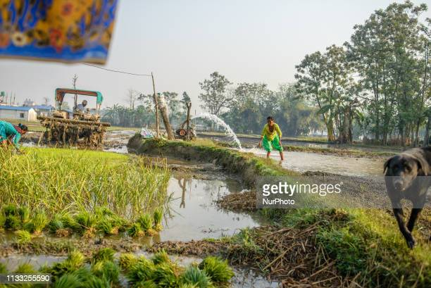 Rice fields in Sauraha Chitwan National Park Nepal on March 24 2019