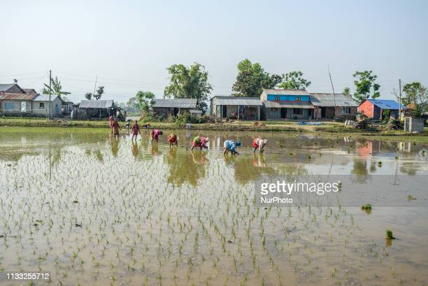 Rice fields in Sauraha Chitwan National Park Nepal on March 28 2019