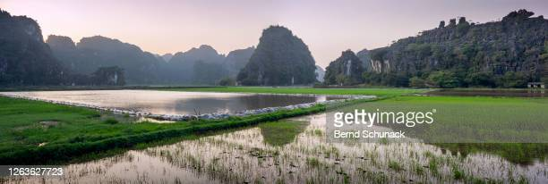 rice fields, in the background the karst rocks of tam coc, ninh binh - bernd schunack stockfoto's en -beelden