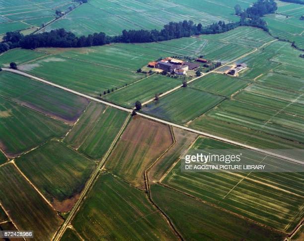 Rice fields in the countryside of Vercelli Piedmont Italy