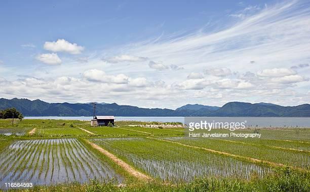 Rice Fields, near lake Tazawa, Japan.