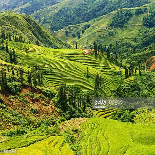 Rice fields near Sapa town in North Vietnam