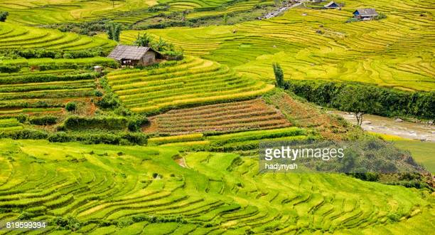 rice fields near sapa town in north vietnam - sapa stock pictures, royalty-free photos & images