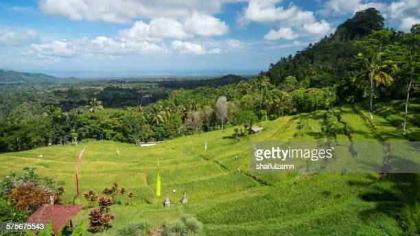 rice fields on bali - shaifulzamri stock pictures, royalty-free photos & images