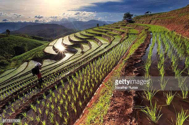 rice fields on terraced at chiang mai, thailand - rice terrace stockfoto's en -beelden