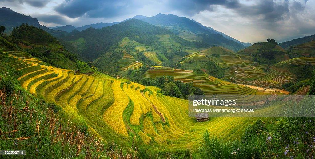 Rice Fields on terraced Mu Cang Chai Panorama shot : Stock-Foto