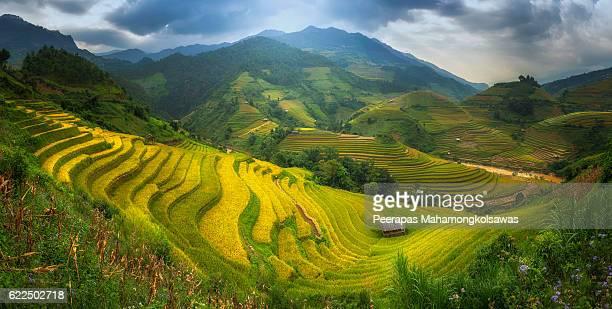 Rice Fields on terraced Mu Cang Chai Panorama shot