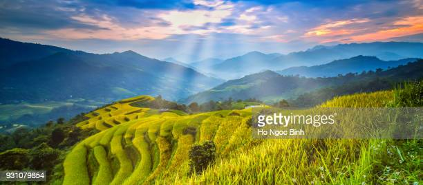 rice fields on terraced of hoang su phi country, ha giang province, north vietnam. - rice terrace stockfoto's en -beelden