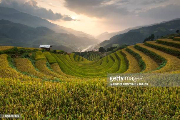 rice fields on terraced of mu cang chai - mù cang chải stock pictures, royalty-free photos & images