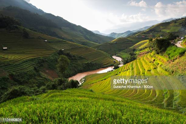 rice fields on terraced. - mù cang chải stock pictures, royalty-free photos & images