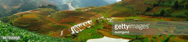Rice fields on terraces with Irrigation system