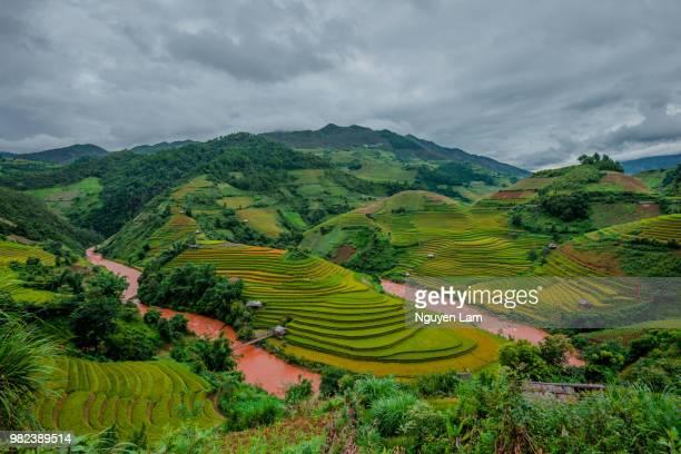 rice fields - terrassenfeld stock-fotos und bilder