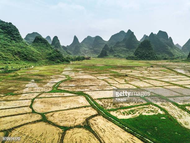 Rice fields scenery, Guilin, China