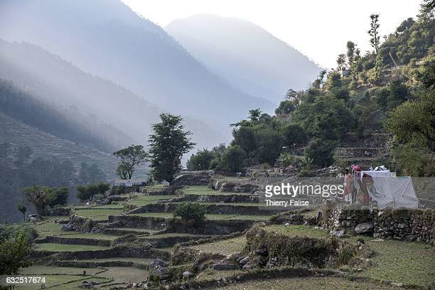 Rice fields stretch along a subsidiary of the Bhagirathi River valley which marks the origin of the Ganges River The Ganges one of the world's...