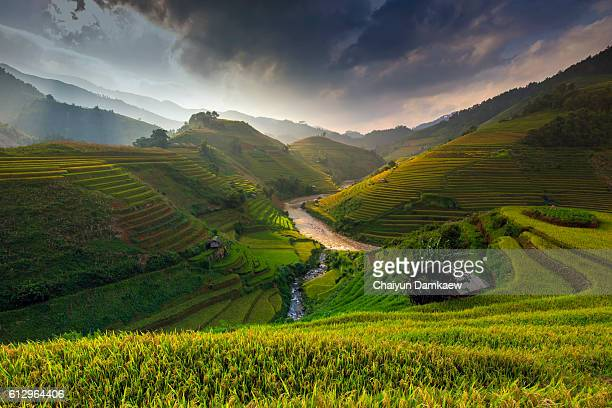 rice fields terraced of mu cang chai, yenbai, vietnam - chai stock photos and pictures
