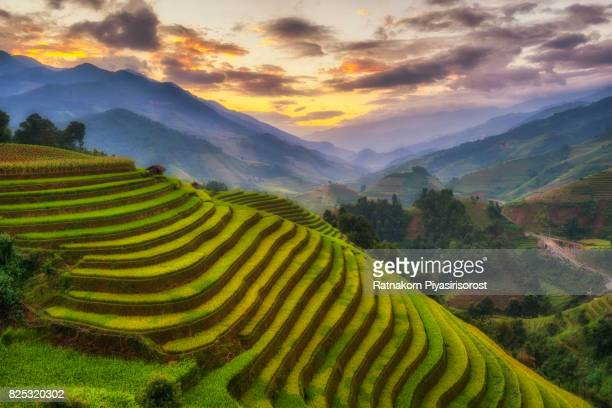 rice fields terraced of mu cang chai, yenbai, vietnam - rice terrace stockfoto's en -beelden