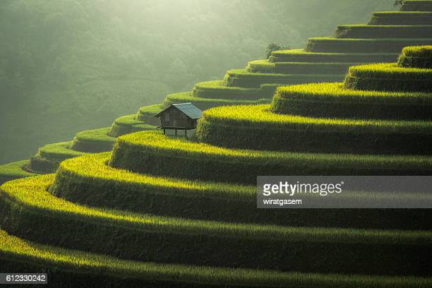rice fields terraced - indonesia map stock photos and pictures