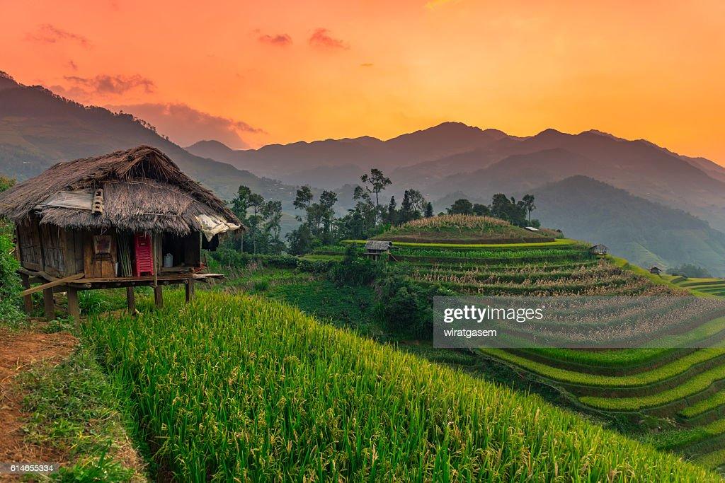 Rice fields terraced : Stock-Foto