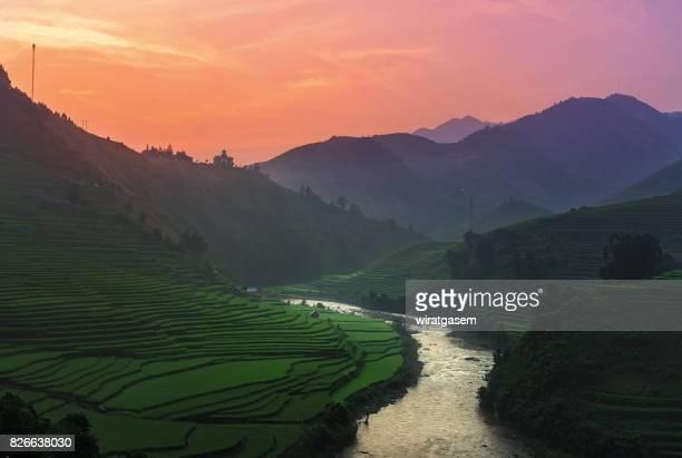 Rice fields terraced