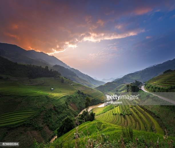 Rice fields terraced
