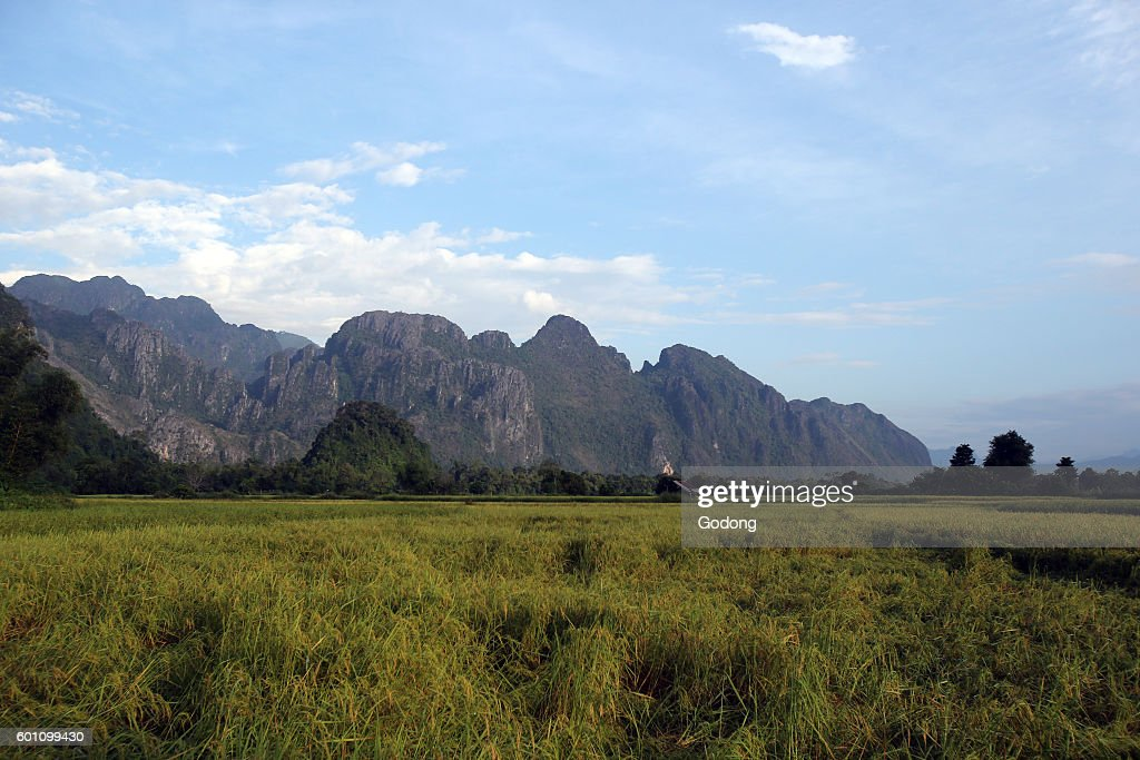 Rice fields with stunning mountain back drop. : News Photo