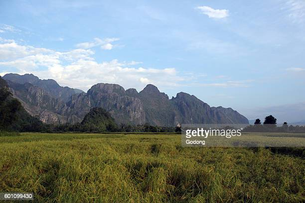 Rice fields with stunning mountain back drop Vang Vieng Laos