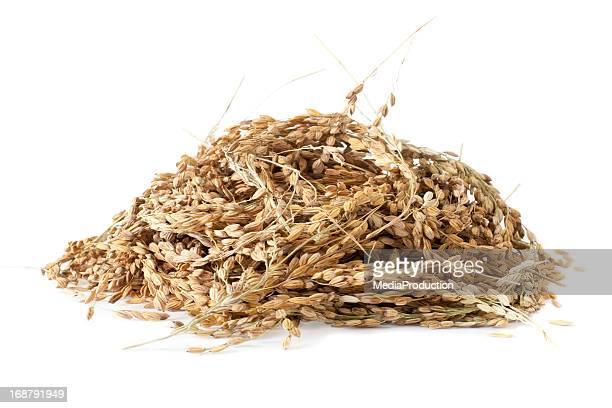 Rice grains in husk