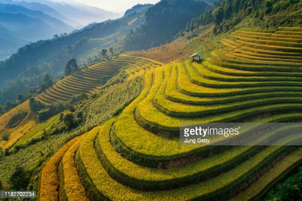rice green field at mucangchai vietnam - indonesia stock pictures, royalty-free photos & images
