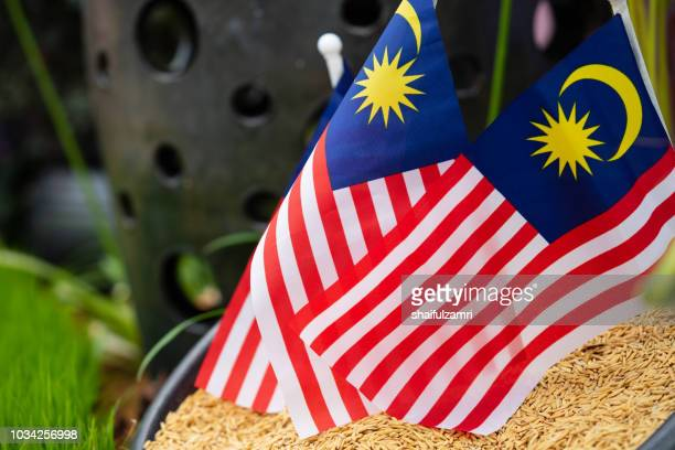 rice is a food staple for malaysia which is celebrate 61st of independence day in 2018. - shaifulzamri stock pictures, royalty-free photos & images