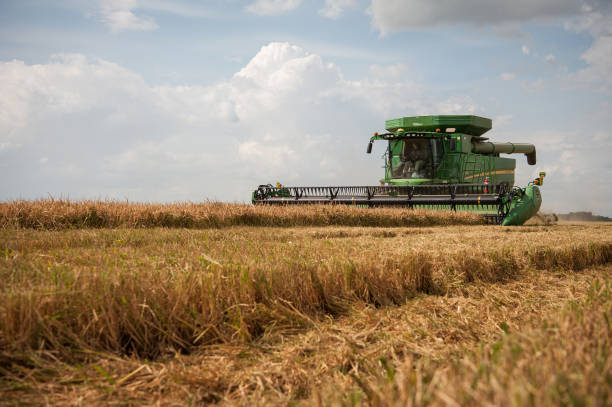 MS: A Rice Harvest As New U.S. Trade Opportunities Arise In 2020
