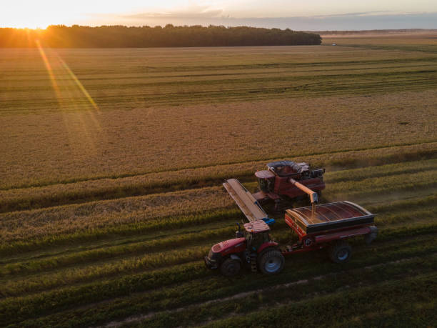MS: A Rice Harvest As USDA Increases Production Outlook