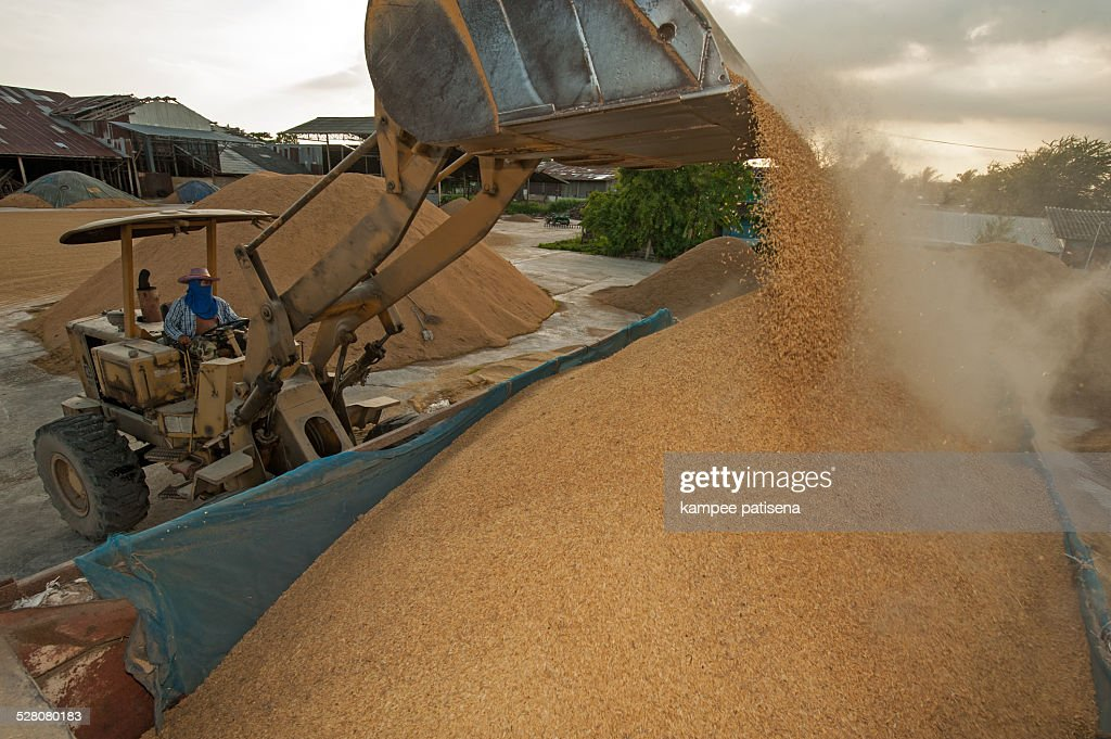 Rice mill and warehouse : Stock Photo