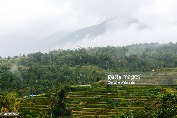rice paddies on a mountainside in bali, indonesia on a rainy day - christine wehrmeier stock photos and pictures