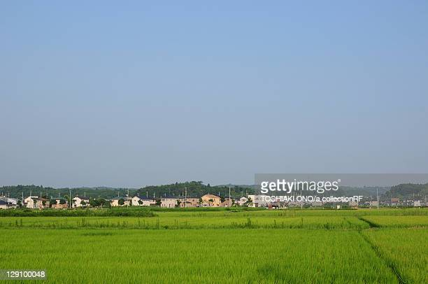 rice paddies - chiba prefecture stock pictures, royalty-free photos & images