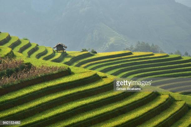 rice paddies tule vietnam - paisajes de india fotografías e imágenes de stock