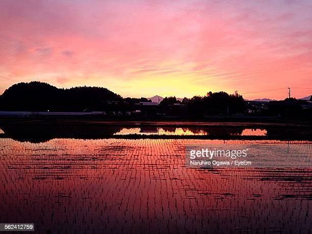Rice Paddy Against Sky During Sunset