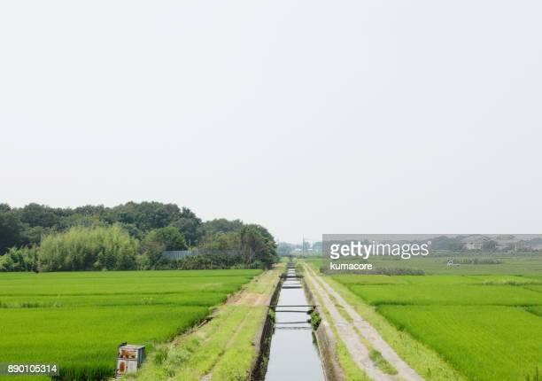 Rice paddy area