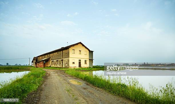 Rice Paddy. Color Image
