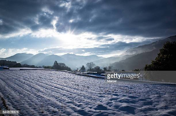 rice paddy covered with snow