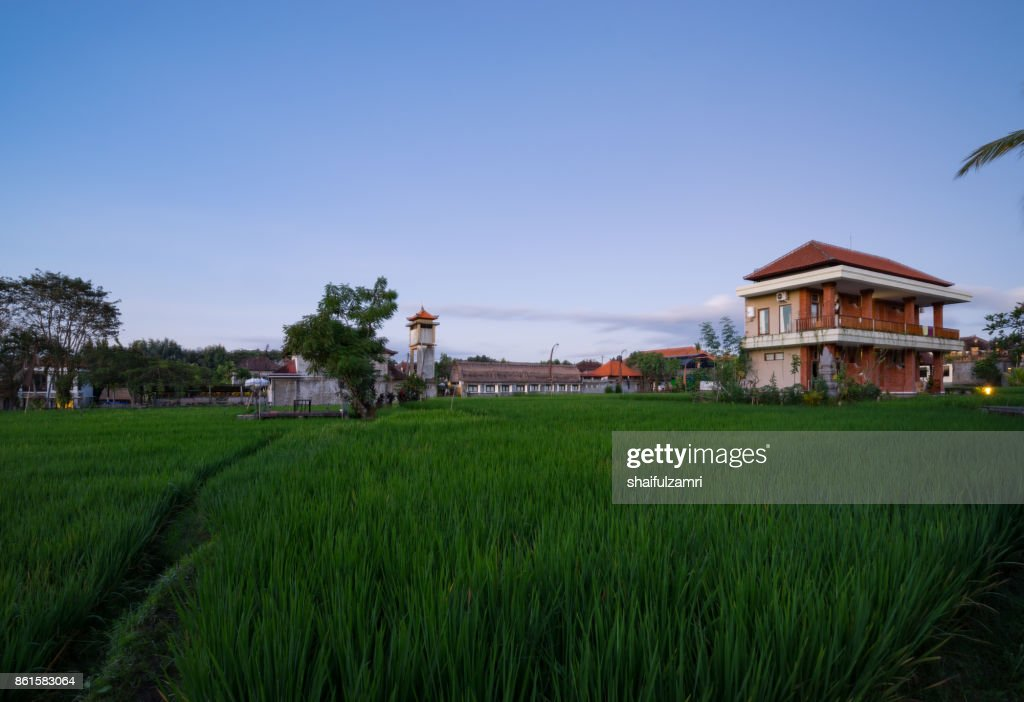 Rice paddy field at the beginning of a new season, agriculture is one of the most important industries Bali, Indonesia. : Stock Photo