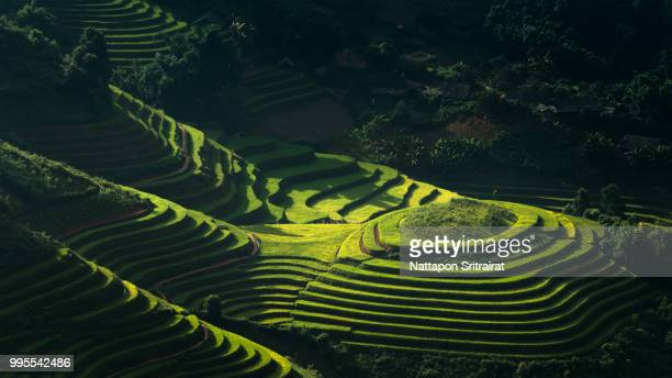 a rice paddy field in mu cang choi, vietnam. - rice terrace stockfoto's en -beelden
