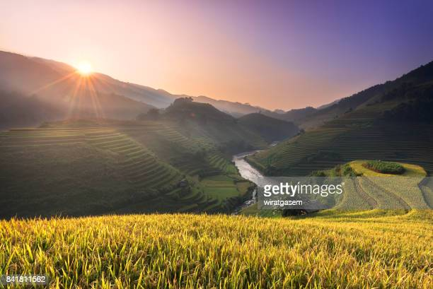 rice paddy fields on terraced. - sapa stock pictures, royalty-free photos & images