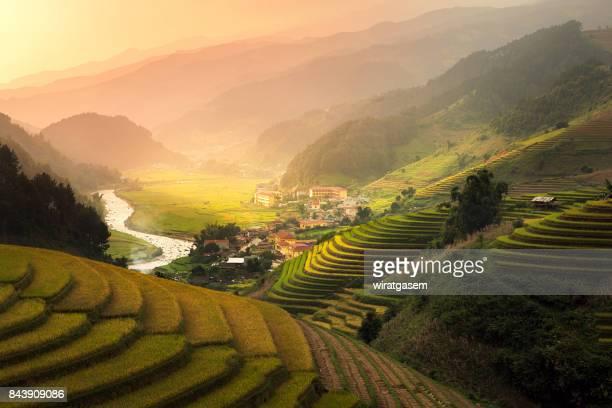 Rice paddy fields on terraced.