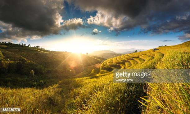 rice paddy fields on terraced. - filipino farmer stock photos and pictures