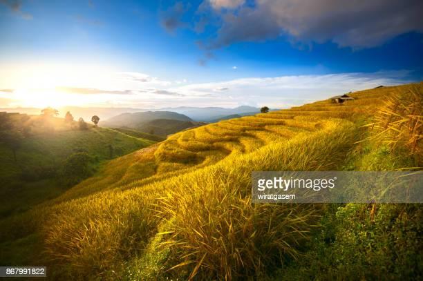 rice paddy fields on terraced. - paisajes de filipinas fotografías e imágenes de stock