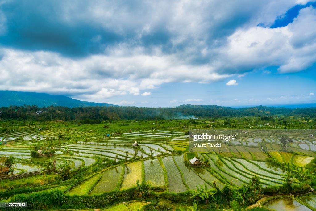 Rice paddy heaven in the Karangasem Regency of Bali, Indonesia : Foto stock