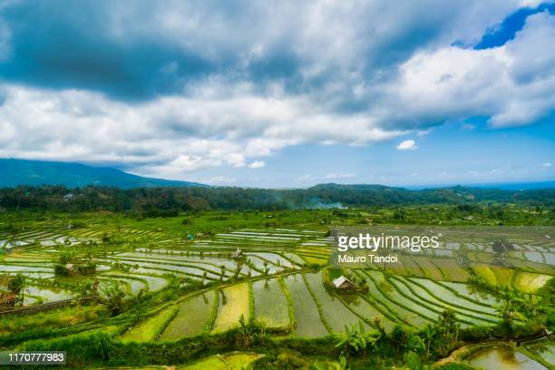rice paddy heaven in the karangasem regency of bali, indonesia - mauro tandoi foto e immagini stock