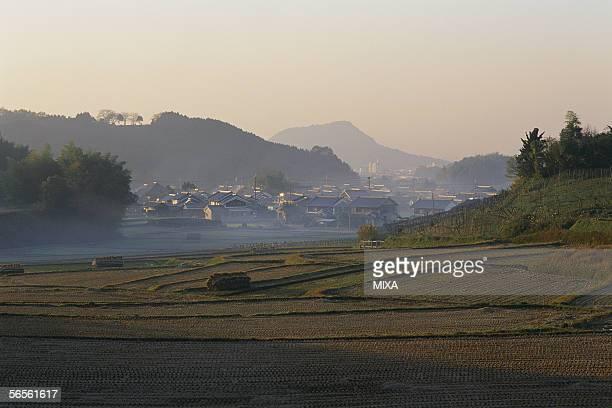 rice paddy in asuka village, nara, japan - asuka stock pictures, royalty-free photos & images