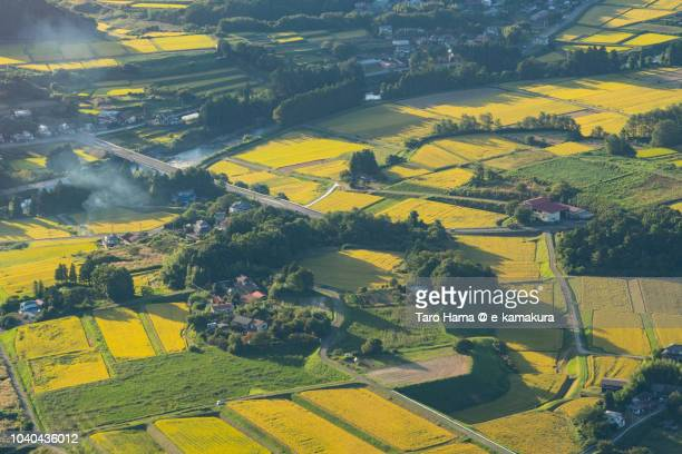 rice paddy in ishikawa town in fukushima prefecture in japan daytime aerial view from airplane - 東北地方 ストックフォトと画像