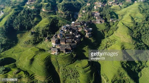rijst paddy in longsheng - rice terrace stockfoto's en -beelden